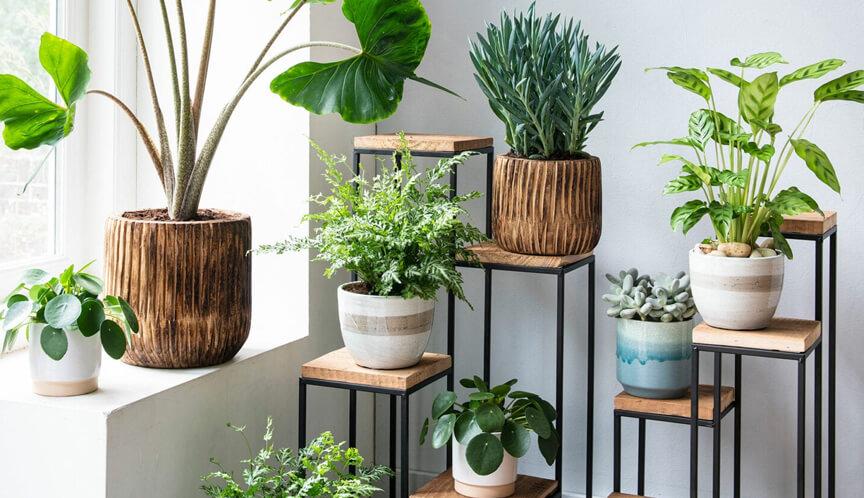 kamerplanten gemakkelijk onderhouden